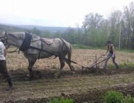 Bean Hill Farm Plows Forward with Horsepower