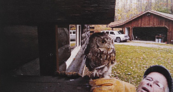 Screech Owl Thriving After Brush with Death