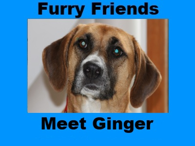 Furry Friends: Ginger