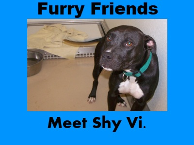 Furry Friends: Shy Vi
