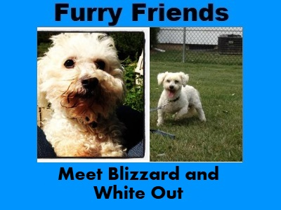 Furry Friends: Blizzard and White Out