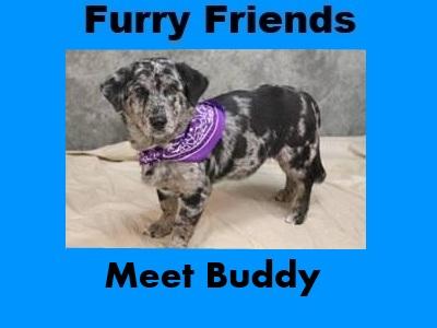 Furry Friends: Buddy