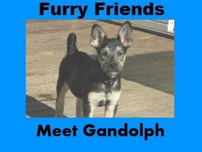Furry Friends: Gandolph