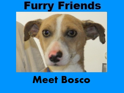Furry Friends: Bosco