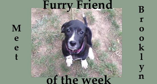 Furry Friend of the Week