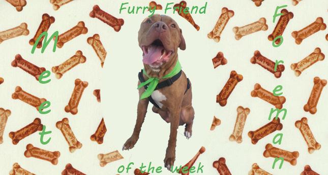 Furry Friend of the Week