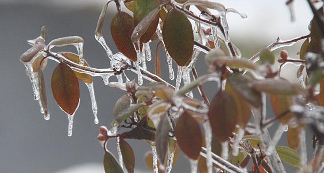 Region Dodges Ice Storm Dagger Before Holidays