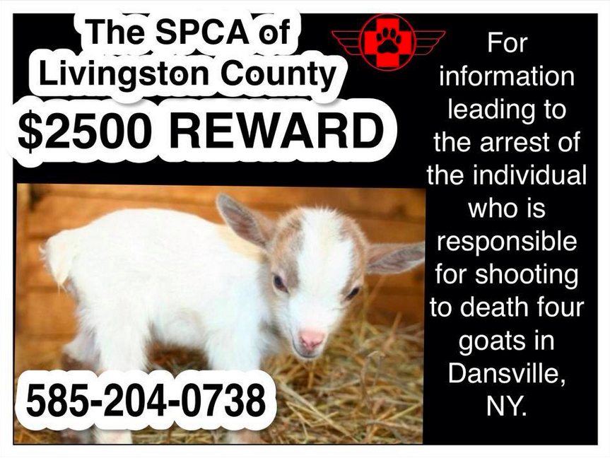 Goat Shootings Leave SPCA on the Lookout