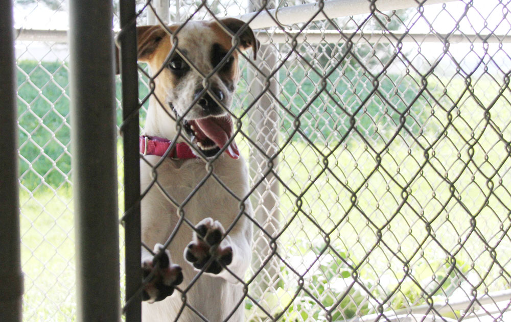 Dog Control Officers are Top Dogs for Canines in Livingston