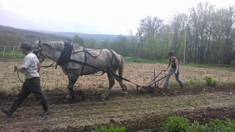 Bean Hill Farm Plows Forward with Horsepower
