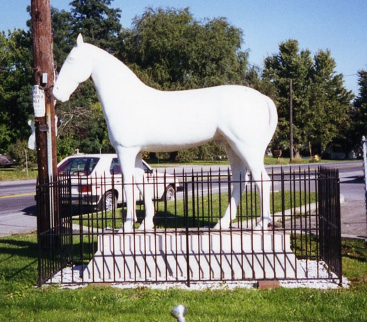 Legendary White Horse of Avon Desperate for New Shoes