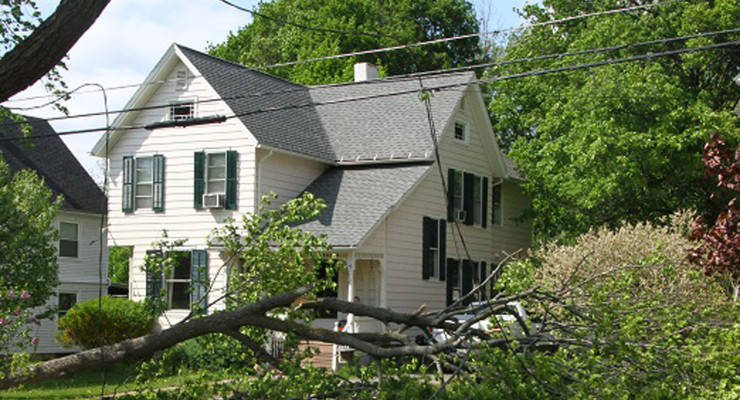 Tree Limbs Damage Geneseo Power Lines in High Winds
