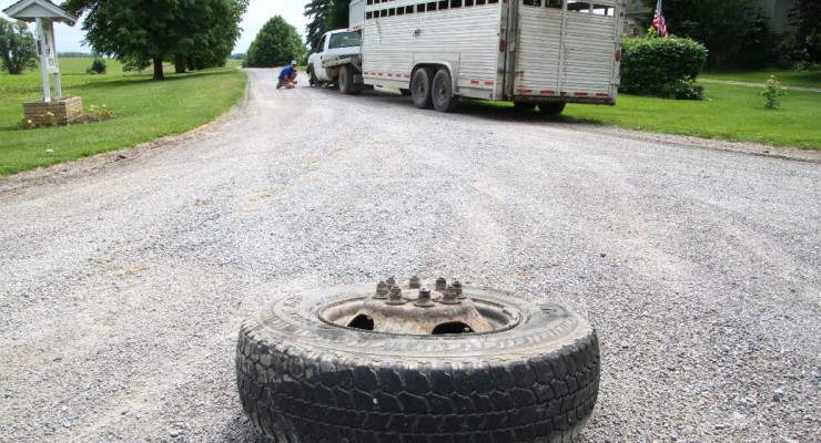 Holy Cow! Truck with Cattle Trailer Loses Wheel in T-Bone