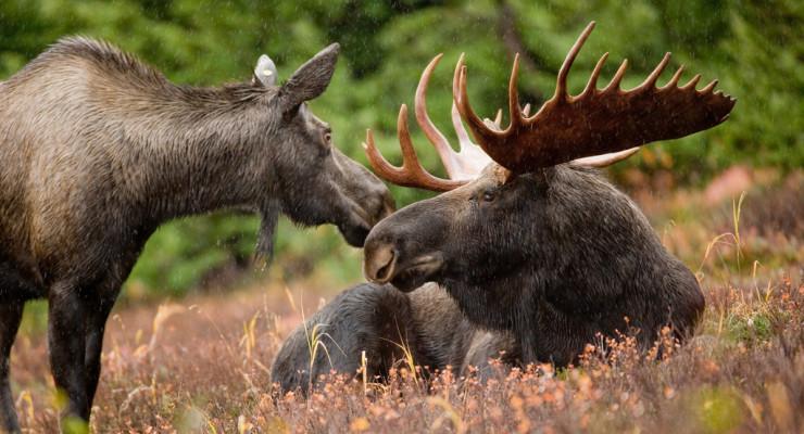 DEC Opens 366 Species Conservation Plan to Public Comment