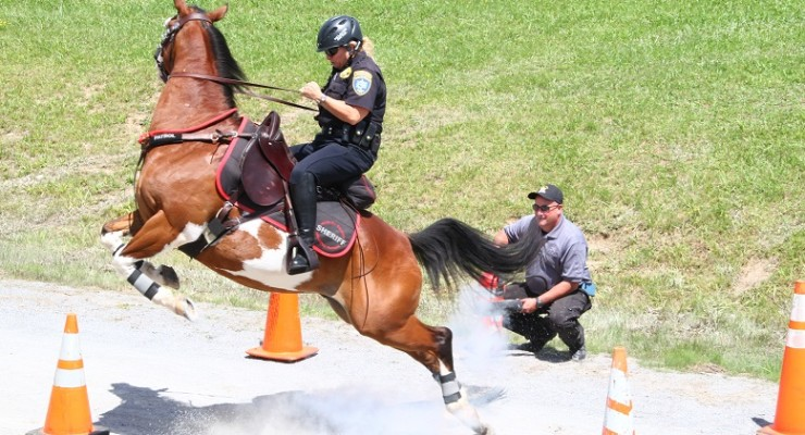 Sheriff's Mounted Competition Draws WNY and Canada's Cops to Hemlock