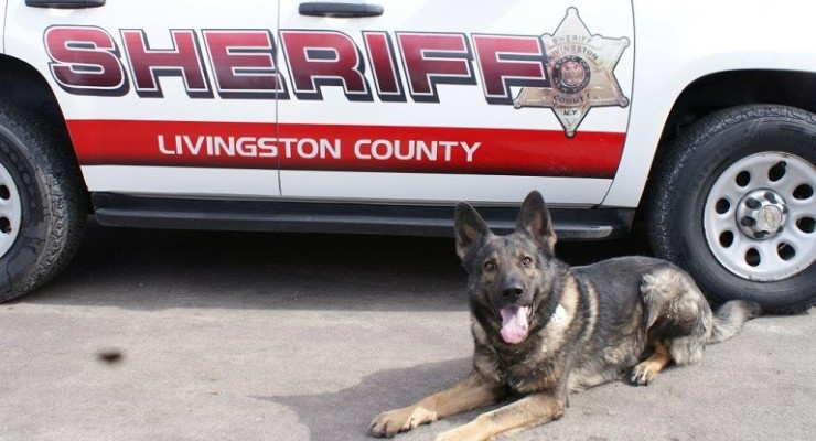Sheriff's Office K9 Officers Awarded Free Ballistic Protective Vests