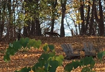 WATCH: Coyote Spotted in Village of Avon