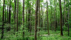Experts to Teach Rural Landowners Basic Forestry