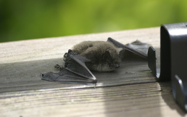 Expert Gives Tips to Battle Bats, Bugs and Unwelcome Critters at Chip Holt Nature Center