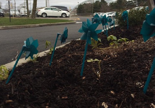 RESTORE Unites 5 Counties in Pinwheel Campaign for Sexual Assault Awareness