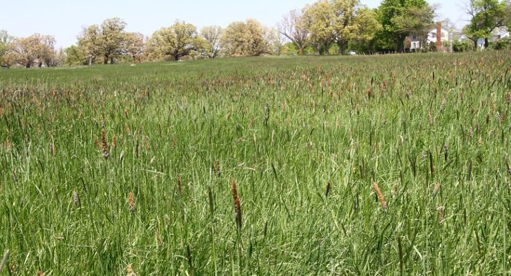 NYS Grants Ossian $25K to Preserve Farmland
