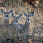 Avon Contemplates Amending Law Regarding Hunting