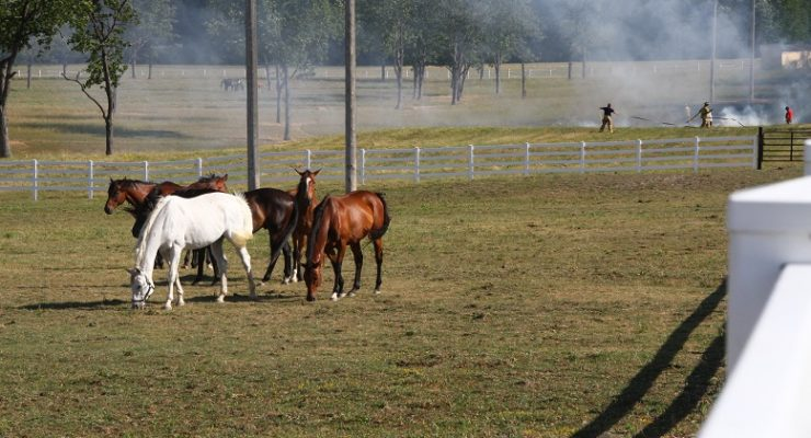 York's Second Grass Fire in 2 Days Strikes Horse Pasture