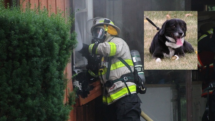 Geneseo Cops and Firefighters Save Cat and Malcolm the Dog from Fire