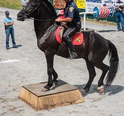Valley Horses: Hemlock Fair Mounted Patrol Competition Honors Those Who Serve