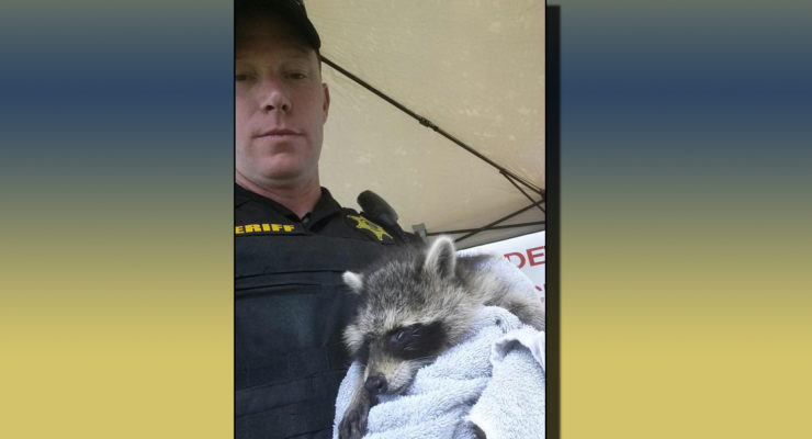 Livingston County Sergeant Rescues Blind Raccoon at Geneseo Airshow