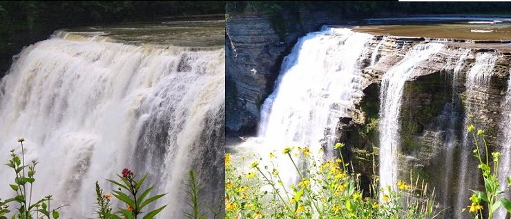 Letchworth's Ecosystem Takes Severe Drought in Stride