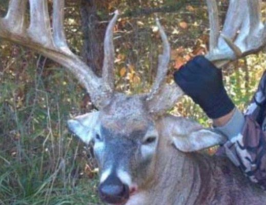 Gotcha! 'Letchworth's Record Buck' a Hoax