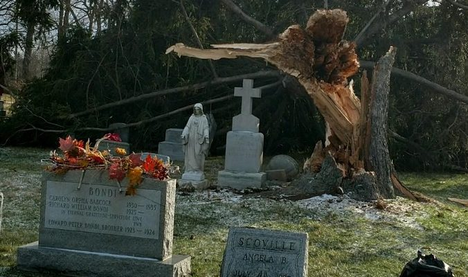 Wind Topples Pine at St. Mary's Cemetery in Geneseo