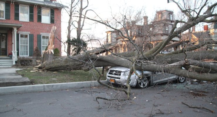 Tree Crushes Car on Main Street Geneseo