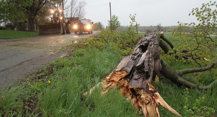 May Day Thunderstorm Cracks Trees in Livingston County