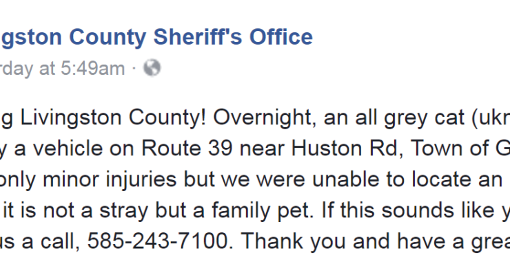 Sheriff's Office Seeks Injured Cat's Owner