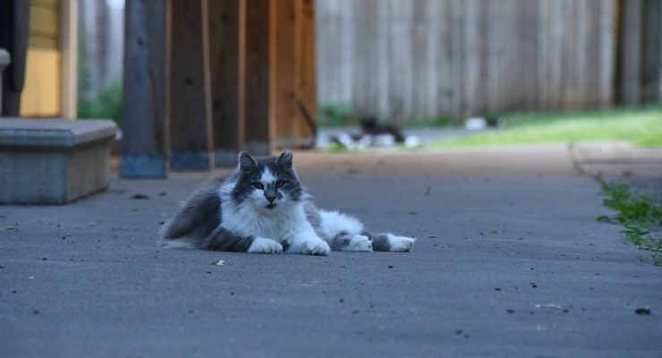 Geneseo Committee Looks to Other Communities for Feral Cat Solutions