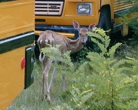 Public to Weigh in on NYS' Plan to Fight Chronic Wasting Disease in Deer