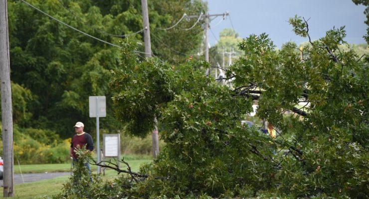 Tree Blocks Rochester Street in Avon
