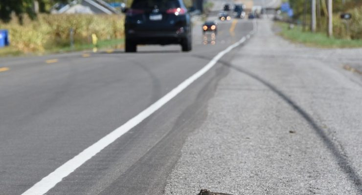 Mount Morris Snapper Reminds Drivers to 'Give Turtles a Brake'