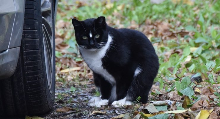 Rutigliano Asks for Funds to Sterilize Geneseo Cats