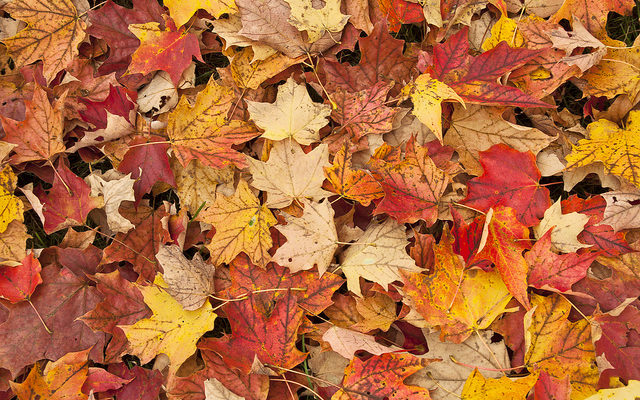 Villages Ask Homeowners to Split Sticks from Leaves