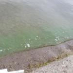 Harmful Algae Bloom Advisory for Conesus Lake