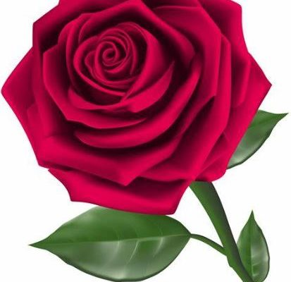 Feed Roses A.S.A.P.