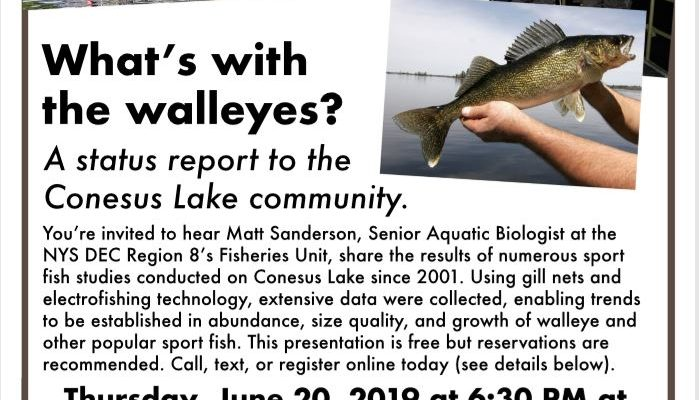 What's Up With The Walleye?