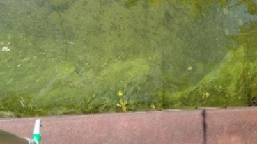 No Visible Harmful Algal Blooms Found On Conesus Lake
