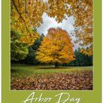 Avon and Geneseo Awarded Tree Maintenance Grants