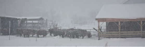 Livestock Needs in Cold Weather
