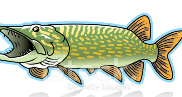 """BACK TO BASICS  WITH THE """"BANDIT"""" :  PURSUE THOSE PIKE"""