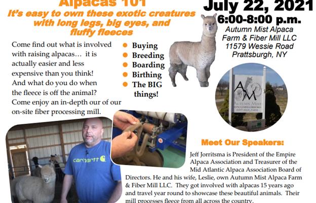 Visit a Steuben County Alpaca Farm and Fiber Mill